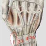 orthopaeden-handgelenk